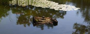 wp-07-turtle-on-log