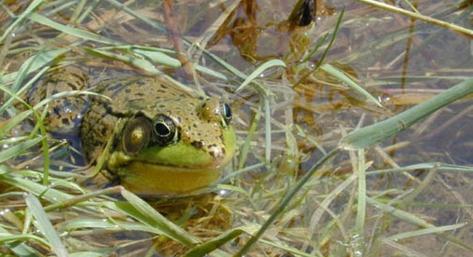 wp10-frog
