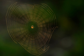wp40-spiderweb