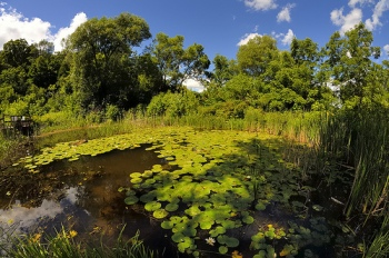 wp44-pond-pano