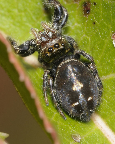 wp45-jumping-spider