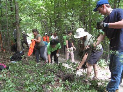 Volunteers clearing cut bushes