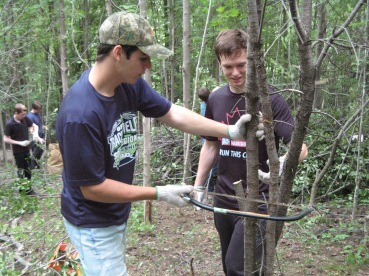 sawing-buckthorn